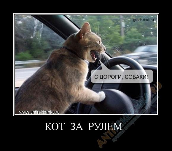 Прикольные картинки коты с надписями за рулем, рождением дочери прикольные