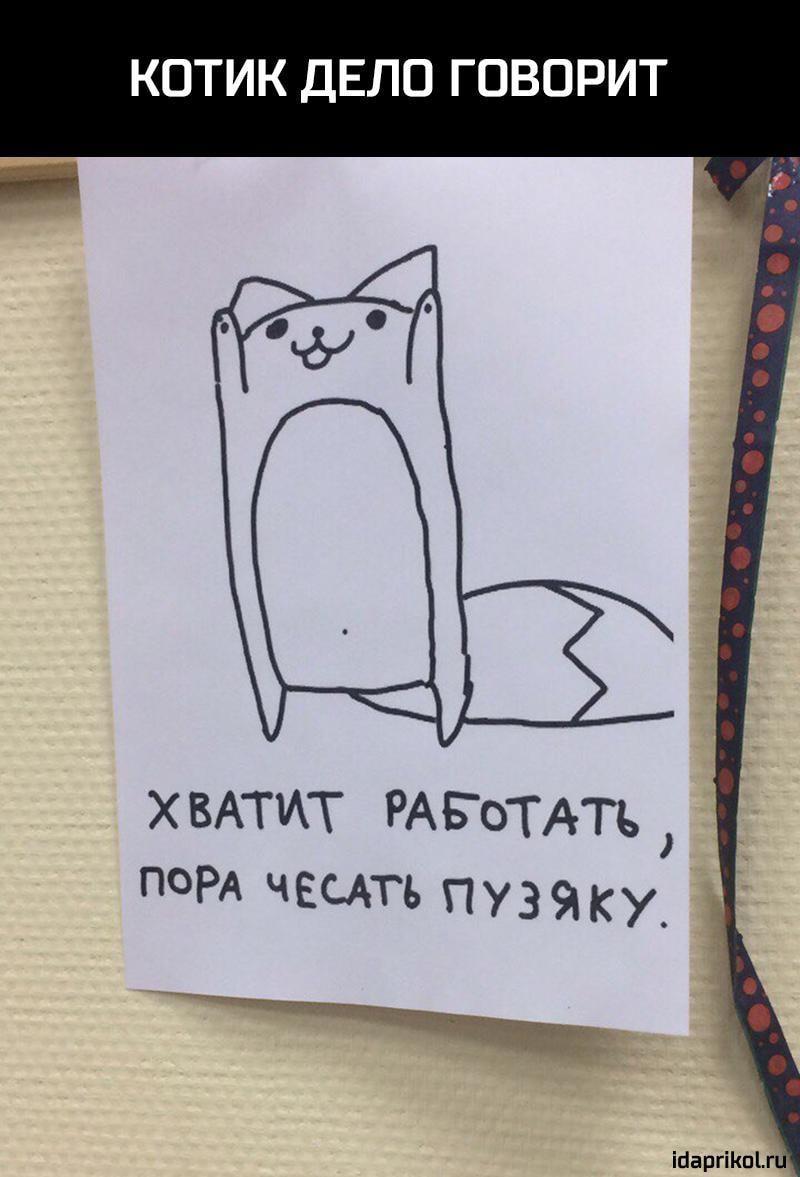 Пора работать картинки, открытки котики